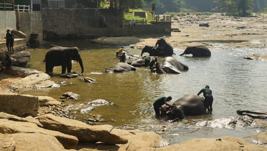 Купание слонов в Пиннавеле
