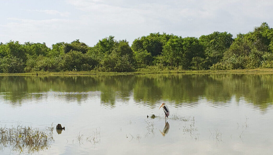 Джип-сафари в парке Удавалаве